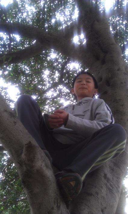 樹-爬樹-真好-130304