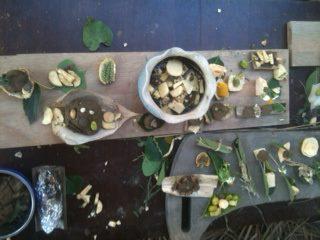 海龜國王的晚宴