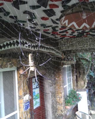 石頭屋的大蜘蛛