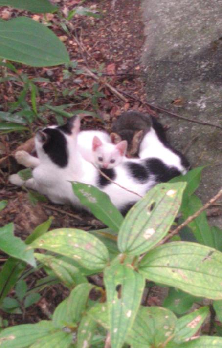 母貓與2小貓