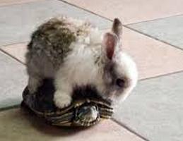 烏龜與兔子
