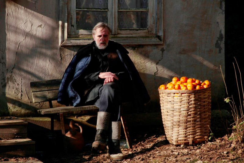 橘子收成時